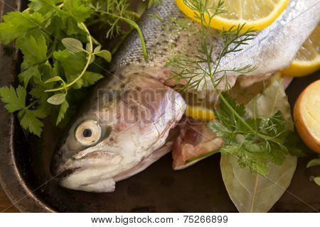 Raw Rainbow Trout