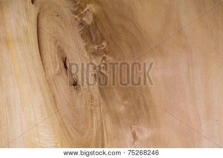 Realistic Wood Veneer With Interesting Growth Rings
