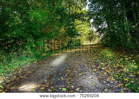 Lane In Autumn Wood.
