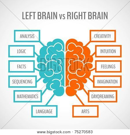 Brain hemispheres infographics