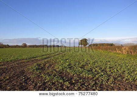 Autumn Arable Landscape