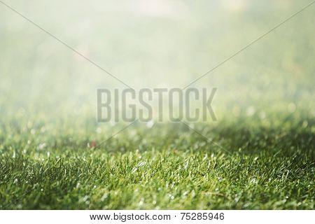 grass With Selective Focus And Beautiful Natural Bokeh