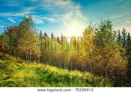Autumn mountain  landscape with birch trees and sunshine in sky (Carpathian, Ukraine).