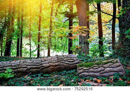 Autumn Landscape With Fallen Tree Trunk