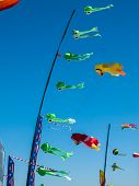 picture of kites  - Kites Flying in Cloudless Sky at the Long Beach Kite Festival Washington USA - JPG