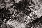 stock photo of dna fingerprinting  - Close up of Finger Prints - JPG