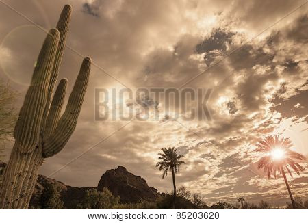 Desert vista landscape, saguaro tree, mountain background.