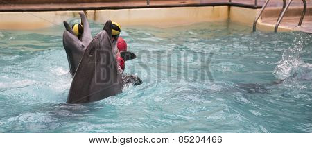 Dolphins Swim With Two Rubber Balls For Trainers