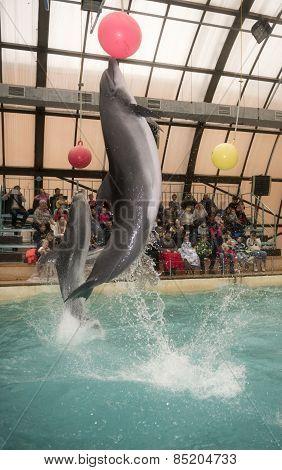 Dolphins Kick Hanging Balls