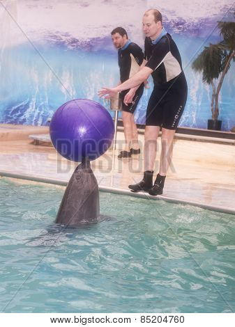 Dolphin Trainer Brought The Ball