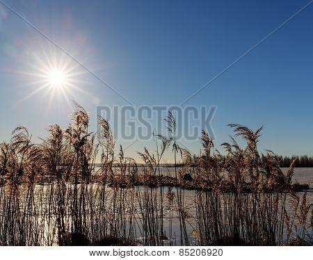 Grass Near The Shore