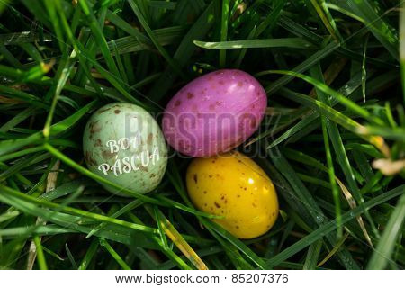 boa pascua against small easter eggs nestled in the grass