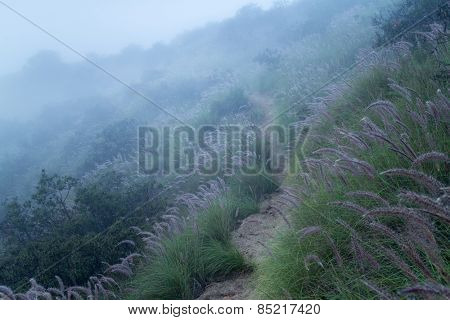 Hiking trail in morning fog in Hollywood Hills, California
