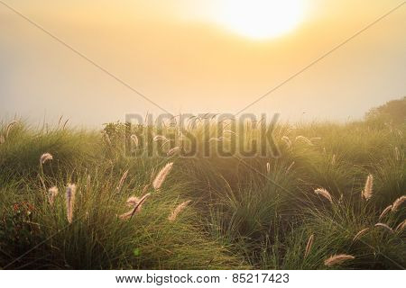 Beautiful sunrise over foggy meadow field in the morning mist