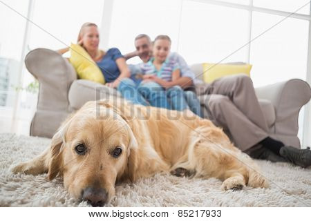 Dog relaxing on rug with family in background on sofa at home