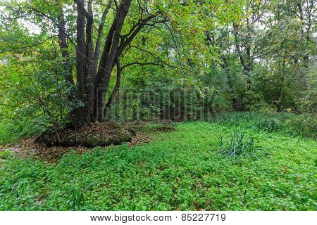 Landscape with green bog in deep forest