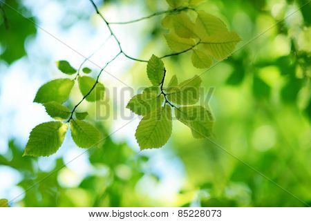 Beautiful green bokeh background with fresh green leaves