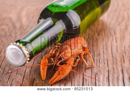 Beer And Crayfish Close-up