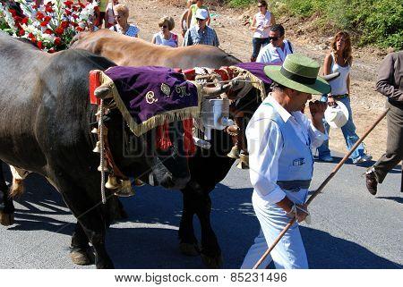 Bull procession, Marbella.