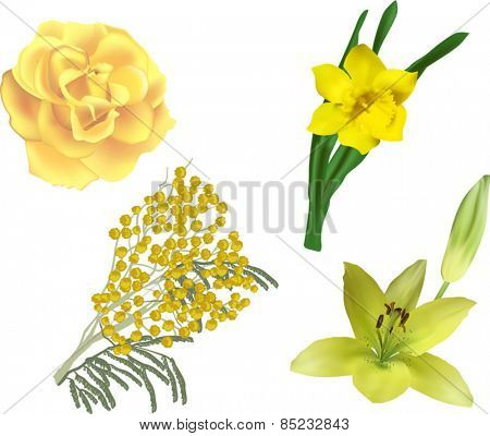 illustration with set of yellow flowers isolated on white background