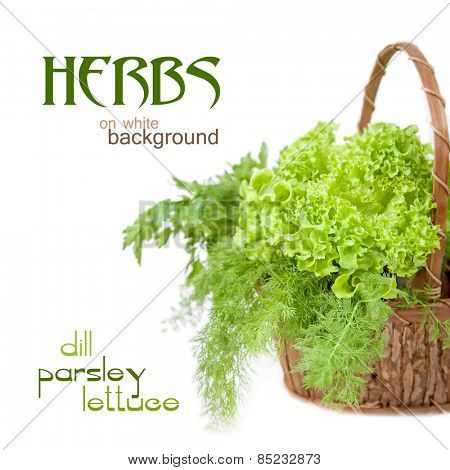 Herbs: dill, parsley, lettuce on a white background