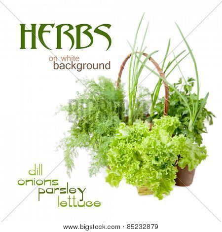 Herbs: dill, parsley, lettuce, onions on a white background