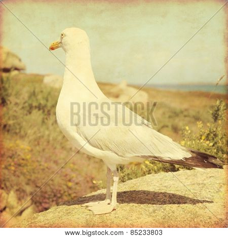 Grunge style photo of seagull on the coast of the Atlantic ocean. Brittany. France.