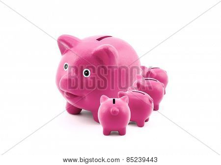 Pink piggy banks feeding from their mother