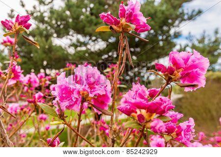 blossom, flowers.
