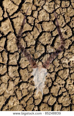 Double exposure of an impala skull over cracked dried earth due to a world drought and climate change, illustrating the effects it has on wildlife