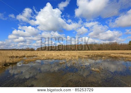 Small lake in among meadow in spring forest