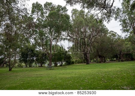 Picnic Park And Walking Path Near Loch Mcness Lake In Yanchep National Park