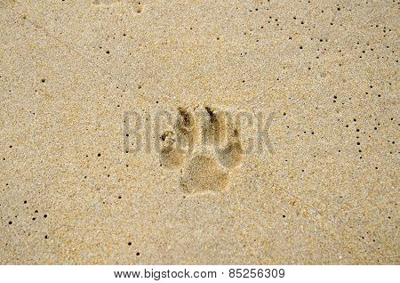Dog Trail On The Beach Sand