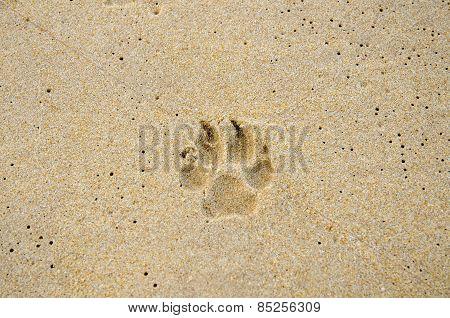 Dog Trail On The Beach Sand