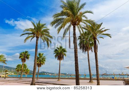Majorca Platja Palmanova beach Son Maties Mallorca Calvia balearic islands of Spain