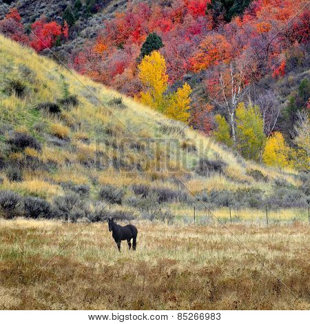 Horses grazing in valley of autumn aspen and maple trees