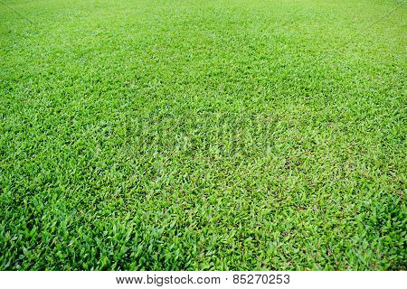Green grass soccer pitch