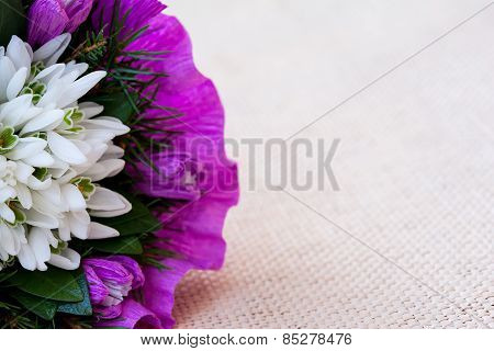 Snowdrop flowers bouquet with fir twigs