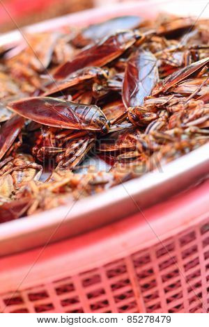 Close Up Of  Insect At The Market