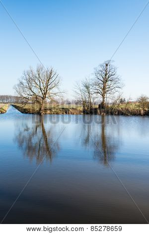 Two Bare Trees Reflected