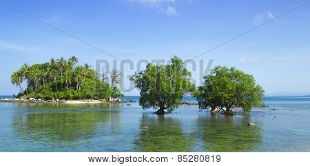 Two Mangrove In The Area Of Low Tide. Southeast Asia