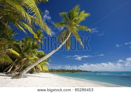 Beach and palm trees