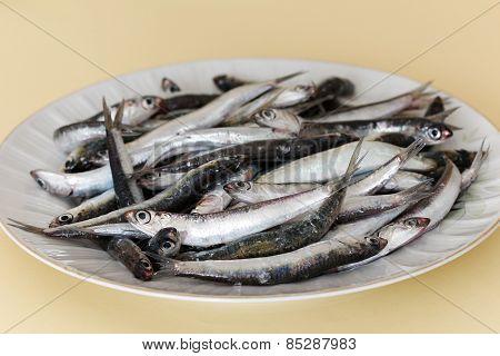 Fresh anchovies.