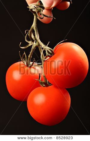 Three fresh ripe tomatoes hanging from above isolated on black
