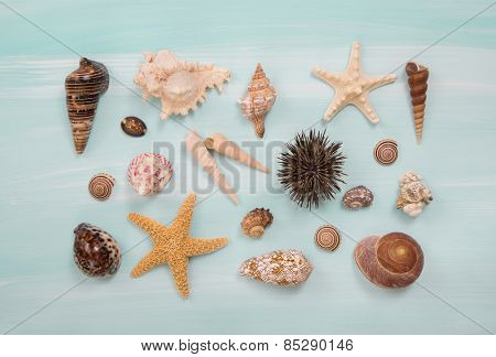 Arrangement of different shells and starfishes on blue or turquoise wooden background.