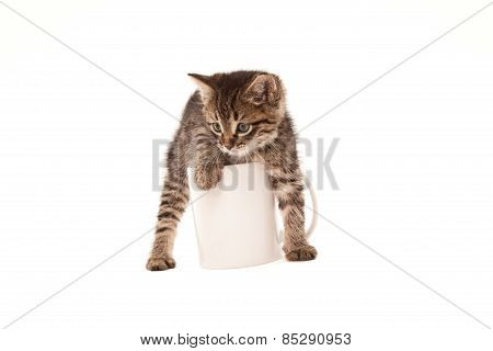Cute Kitten In White Cup Isolated On White