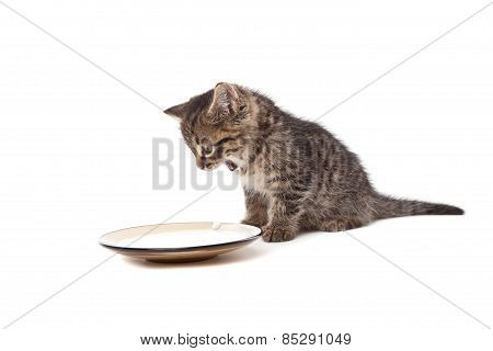 Cute Small Kitten Screaming On Milk Plate