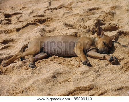 Sleeping stray puppy on the beach