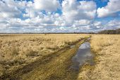 image of steppes  - Scene with rut road in steppe at a nice spring day - JPG