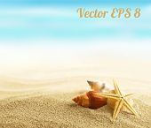 image of sunny beach  - Shell and starfish on sandy beach vector illustration EPS 8 - JPG